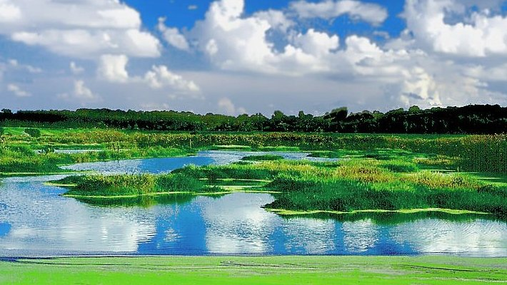 Picture of a wetland marsh.