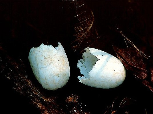 Picture of recently hatched turtle eggs.