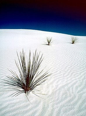 Picture of White Sands National Monument.