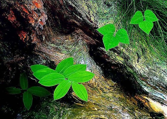 Picture of woodland leaves at Watkins Glen, New York.